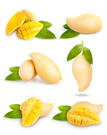 Yellow mango collection isolated on white background.