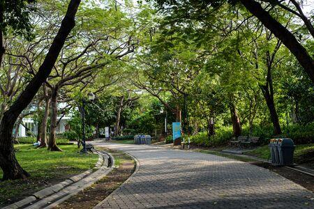 Stone Pathway in the garden. Standard-Bild