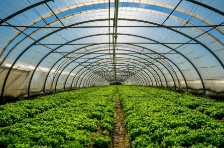 Young plants growing in a very large plant nursery in the france Stock Photo