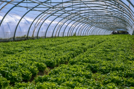 As plantas jovens crescem em um grande viveiro de plantas na França