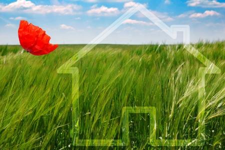 conceito de casa ecológica verde com papoila