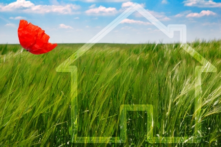 concept of green ecological house with poppy Stock Photo