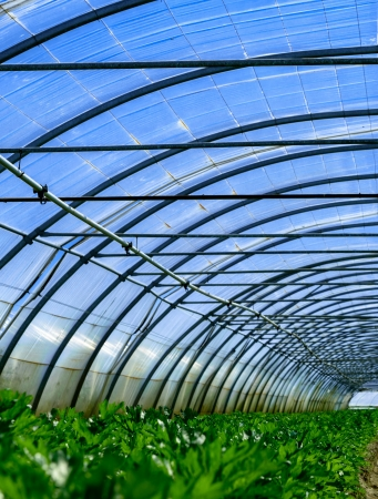 growing plants in a greenhouse Stock Photo