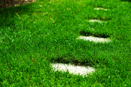 closeup of beautiful grass with curbstone photo