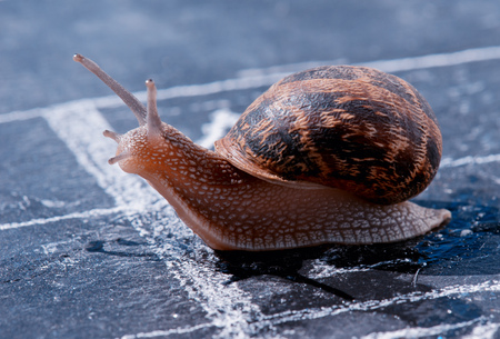 snail crosses the finish line alone as winner photo