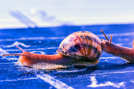 snail finish encouraged by its congener photo