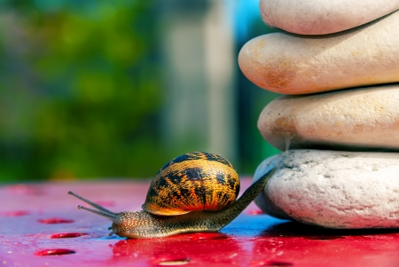 transcend: snail from crossing an obstacle Stock Photo