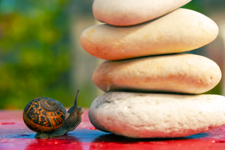 hesitating: snail was hesitating over an obstacle