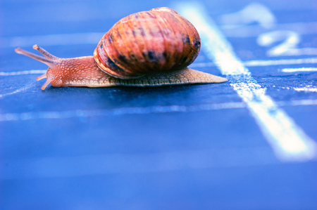 snail crosses the finish line as winner photo