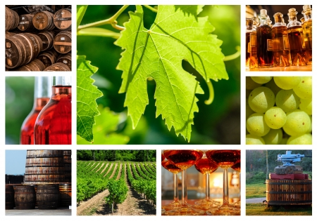 collage about vineyard and wine industry photo