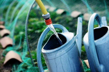 Gardening, fill watering can of water for watering the plants in garden  Safety net against birds  photo