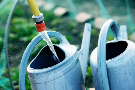 Gardening, fill watering can of water for watering the plants in garden  Safety net against birds