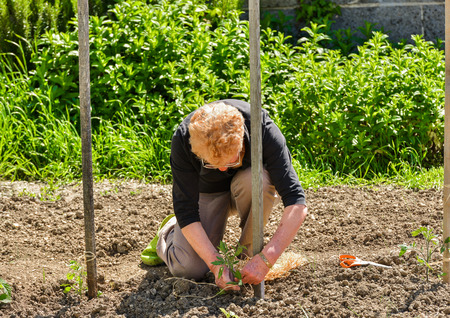 establishment: Establishment of guardians in the vegetable garden Stock Photo