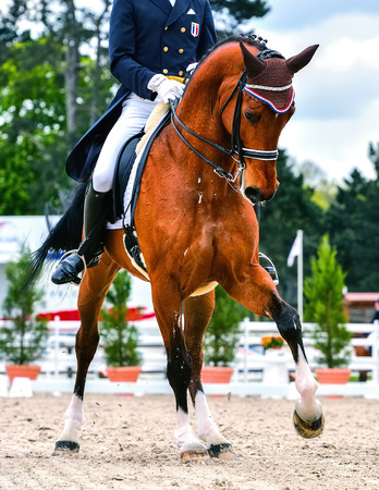sideway: dressage horse and rider on dressage competition