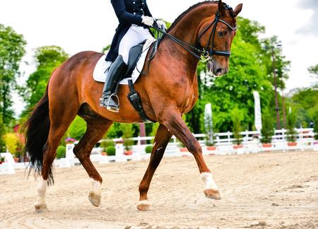dressuur paard en ruiter op dressuurwedstrijd Stockfoto