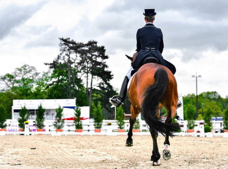 dressage horse and woman rider on dressage competition Stok Fotoğraf