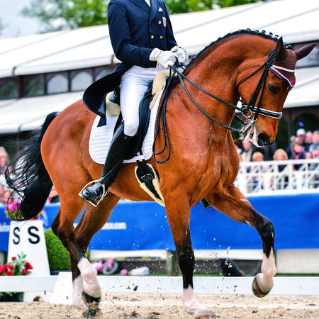 Dressur Pferd und Reiter auf Dressurprüfung