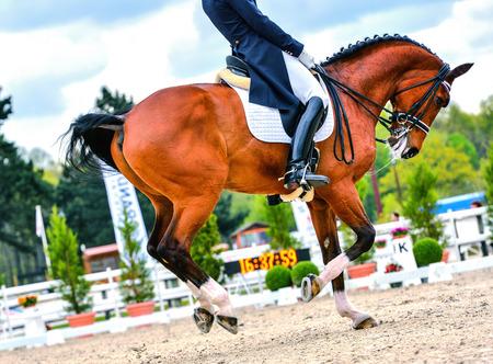 馬術の馬およびライダー馬場馬術競技