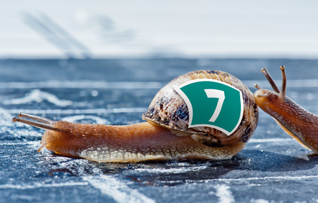 encouraged: snail finish encouraged by its congener crosses the finish line Stock Photo