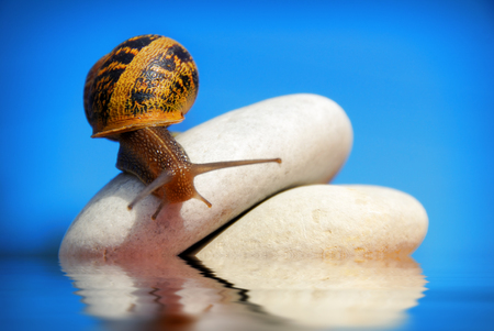 snail on a pile of pebbles with sky on background photo