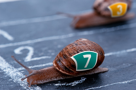 snail crosses the finish line as winner Stock Photo