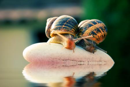 transcend: couple snail on a pebbles mountain