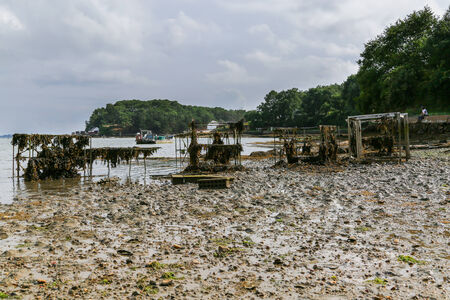 algal: View of oyster park in southern Brittany
