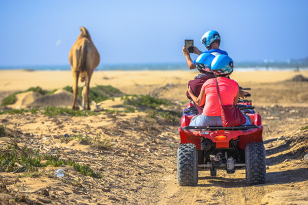 Three young boys riding a quad in a deserted area and filming the lonely pasturing animal on their tablet photo