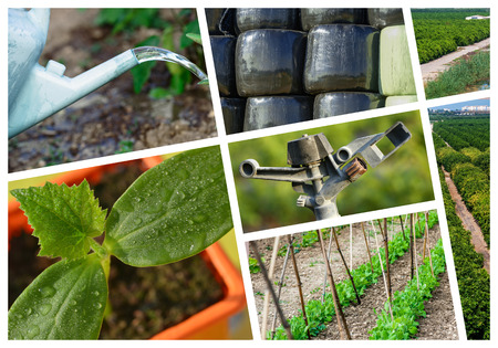 collage mix of  farming and gardening in countryside photo