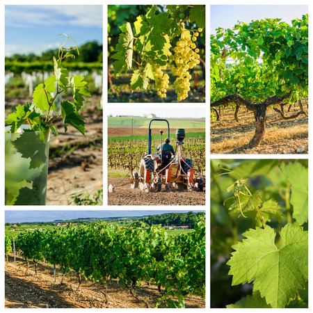 collage and composition about vineyard and wine industry photo
