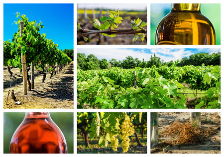 oenology: collage and composition about vineyard and wine industry