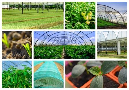 market gardener: collage mosaic mix of  farming and gardening in greenhouse