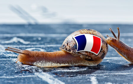 protectionism: snail with the colors of France flag encouraged by another country