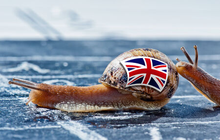 protectionism: snail with the colors of England flag encouraged by another country