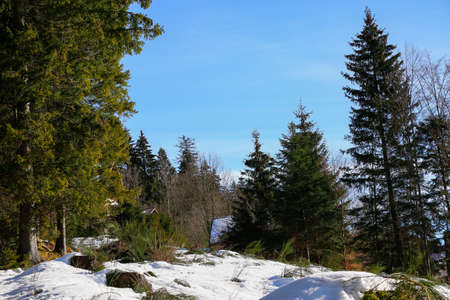 Landscape of Forest in Vosges mountain, France photo