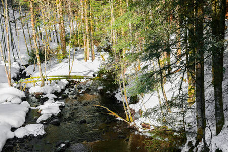 small river: small river in vosges mountain Stock Photo