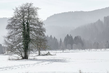 Winter landscape of Forest in Vosges mountain, France photo