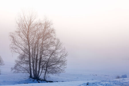fog: Tree Silhouette on the snow and fog