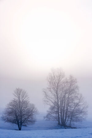 restful: Tree Silhouette on the snow and fog