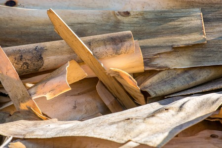 reprocessing: close up of processed wood waste and wood shavings
