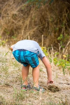 young boy exploring nature bordering forest Stock Photo