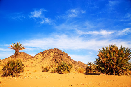 mountain oasis: Beautiful Moroccan Mountain landscape in desert with oasis Stock Photo