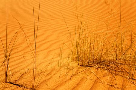 aridness: close-up on dry shrubs in the desert