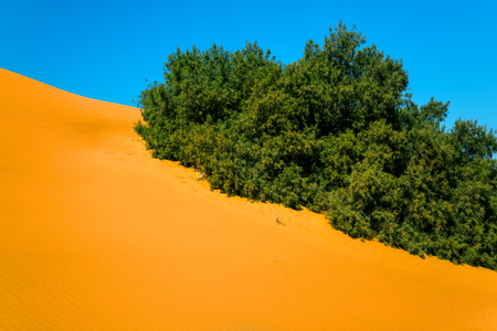 Sand dunes and vegetation in the Sahara Desert