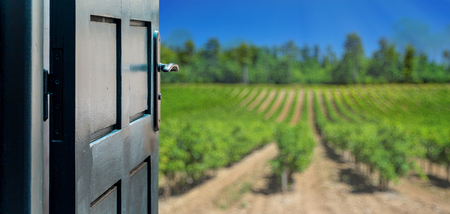 health symbols metaphors: Opened door concept to beautiful and imaginary vineyard