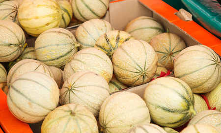 Charentais melons at farmers market