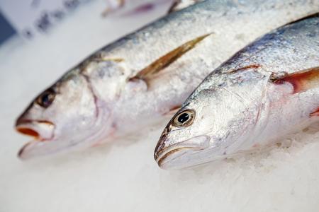 ligne: fresh meagre on ice at seafood market