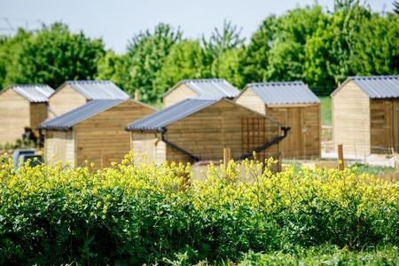 paysagiste: Jardin urbain écologique avec petite cabane en bois et colza au premier plan