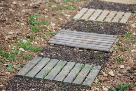 slab wooden walkway in town garden