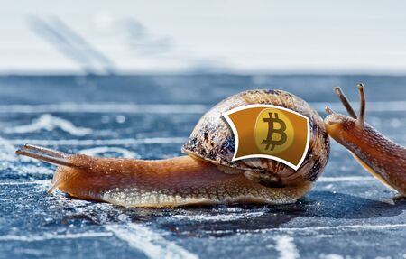 snail with the colors of Bitcoin currency flag encouraged by another